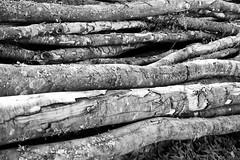 Bois du Vercors
