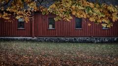 Autumn at Hove 1