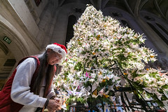 Third generation Japanese American Karen Kai is working on decorating the world's largest origami Christmas tree with handfold origami cranes in San Francisco, California, United States on December 7, 2019. (Photo by Yichuan Cao/Sipa USA)