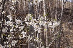 Spring in Tortum