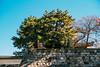 Photo:名古屋,名古屋城 By