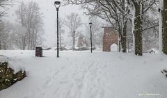 "Snow blizzards! - ""Tuisus !!"" lumine❄️❄️ Viljandi - 26.02.2020"