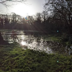 Tooting Common (that's not a lake - it's waterlogged)