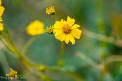 Yellow flowers-4550