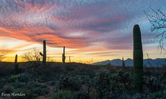 Sunset-4776