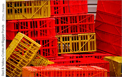 Red & Yellow Crates At Biggar Ponds