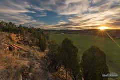 Blufftop Sunstar