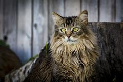 Harper kitty