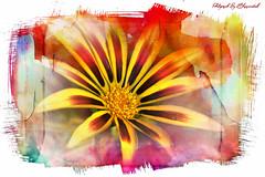 Flower art 0021 s