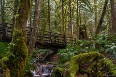 Wallace Falls trail