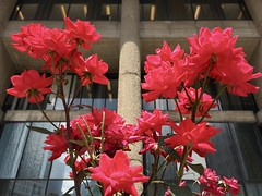 Boston - Summer Flowers!