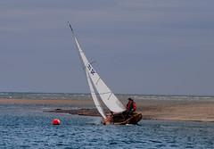 Mermaid sailing