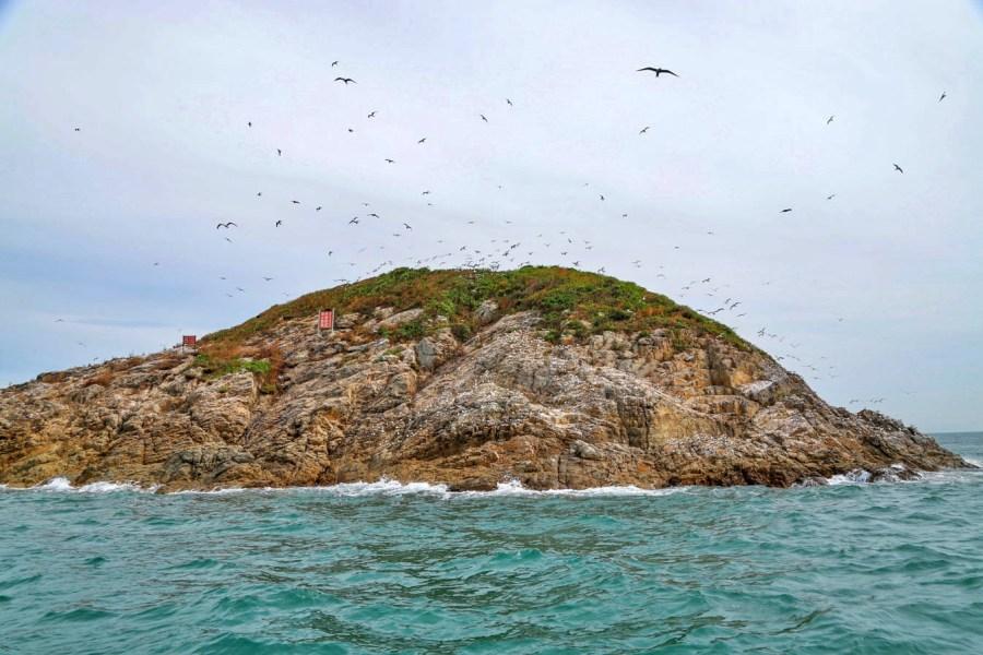 [馬祖旅遊]生態賞鷗暨海上看馬祖|每年6~10月季節限定賞神話之鳥.來去鐵尖島看黑嘴端鳳頭燕鷗 @VIVIYU小世界