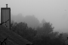 Morning Fog (Flip View) - Old Bridge NJ