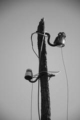 Sen luz - Juan Rúa