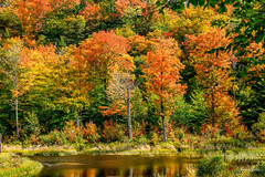 The colors of Fall🍁🍁 Vermont