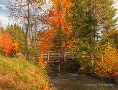 Fall has always been my favorite season. The time when everything bursts with its last beauty, as if nature had been saving up all year for the grand finale. The Upper Peninsula of Michigan