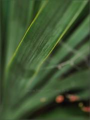 grünblatt