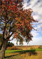 - Herbst -