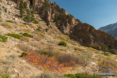 Clarks Fork Canyon Color