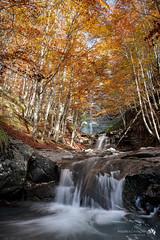 Acqua e autunno. Ottobre 2020.