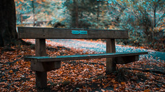 Hugh & Katies Bench