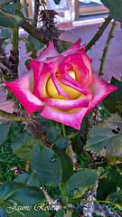 Flor- - 503