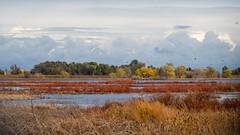 Wetland Autumn