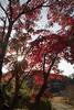 Photo:Kaju-ji Backlit / 逆光の勧修寺 By