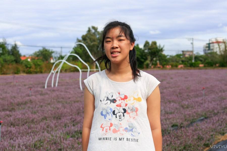 [桃園旅遊]2020桃園仙草花節|楊梅浪漫一日遊景點~紫色花海.偽出國場景 @VIVIYU小世界