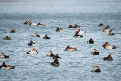 水面近くにカメラを落としてローアングルで撮る