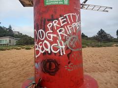 pretty ripper dog beach