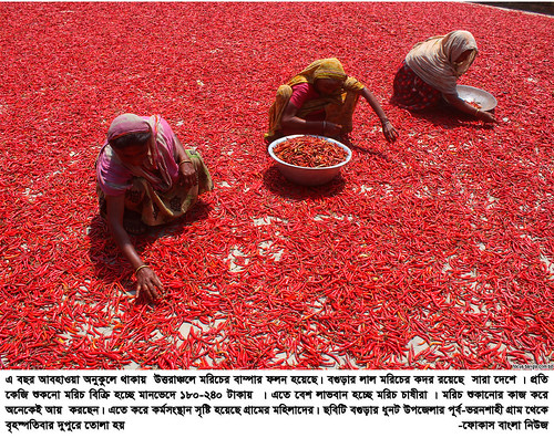 01-04-21-Bogra_ Red Pepper-6