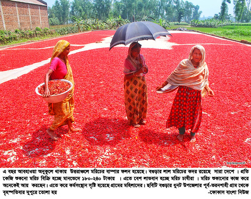 01-04-21-Bogra_ Red Pepper-1