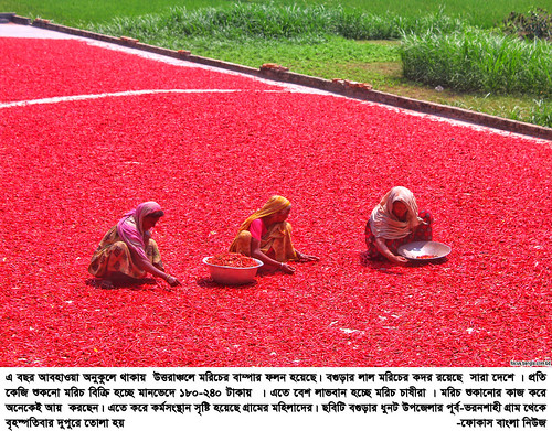 01-04-21-Bogra_ Red Pepper-7