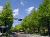 Photo:新緑の山下公園通り By