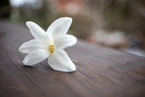 flower spring cream virág tavasz krémszínű