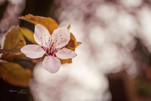 spring, flower tavasz, Frühling, virág blumen