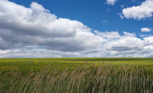 tájkép tavasz repce felhők landscape spring rapeseed clouds