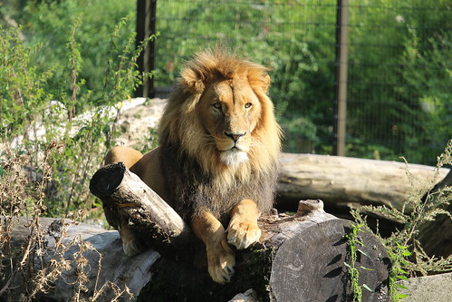 """Zoo - Duisburg, Germany • <a style=""""font-size:0.8em;"""" href=""""http://www.flickr.com/photos/104409572@N02/51592231293/"""" target=""""_blank"""">View on Flickr</a>"""