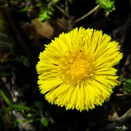 Spring finally! - Le printemps enfin!