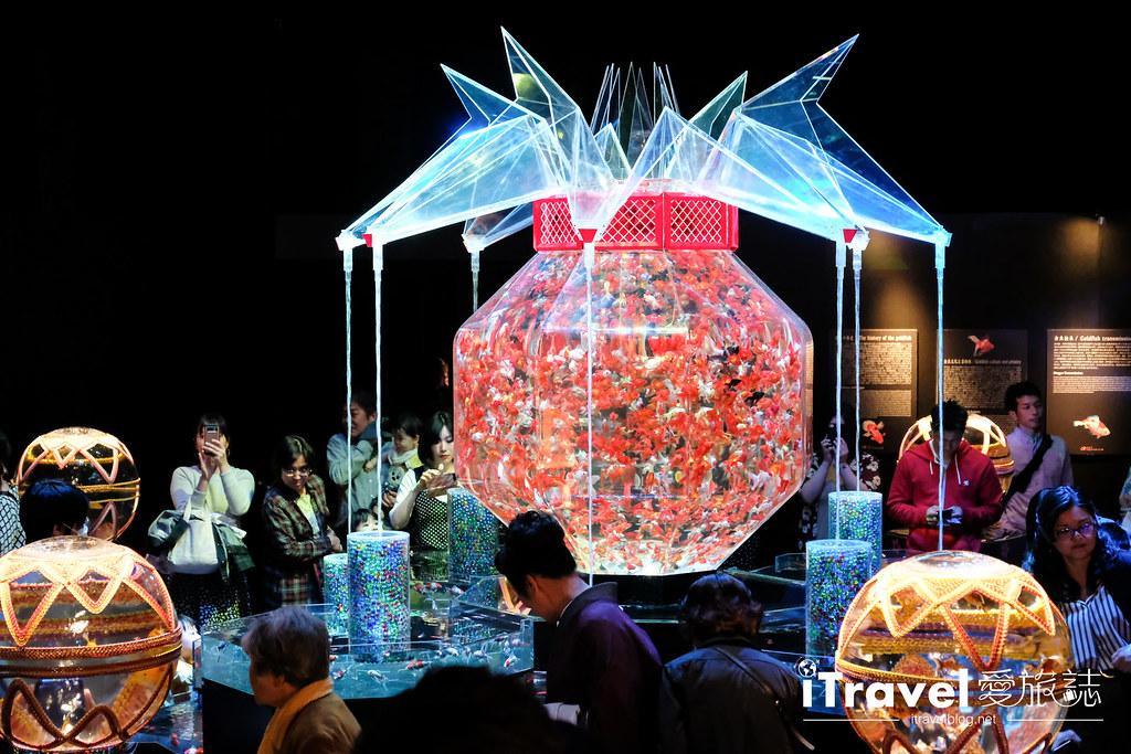 福岡展覽推薦 博多金魚の祭 (48)
