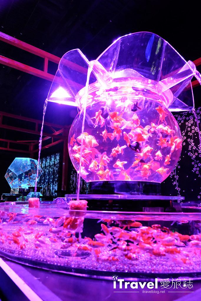 福岡展覽推薦 博多金魚の祭 (40)