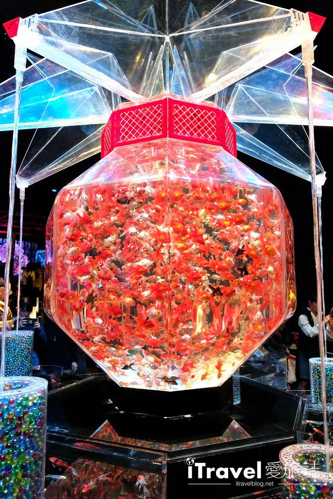 福岡展覽推薦 博多金魚の祭 (21)