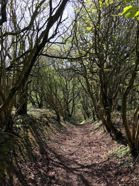 Gopher Wood