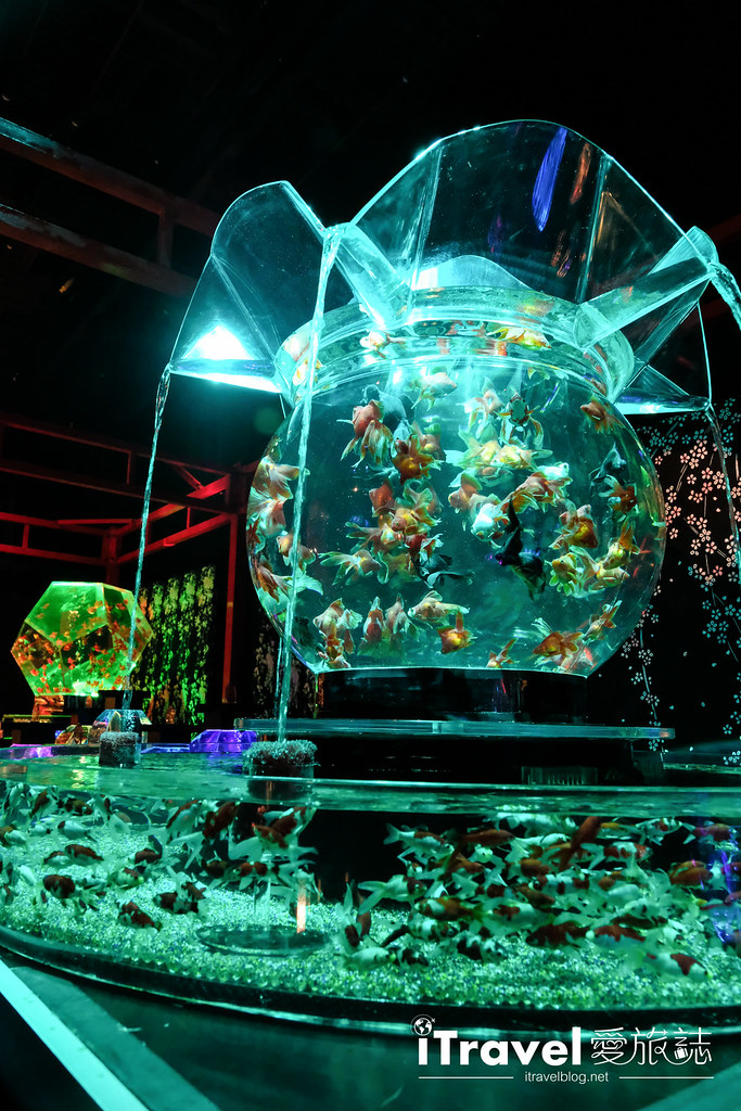 福岡展覽推薦 博多金魚の祭 (41)