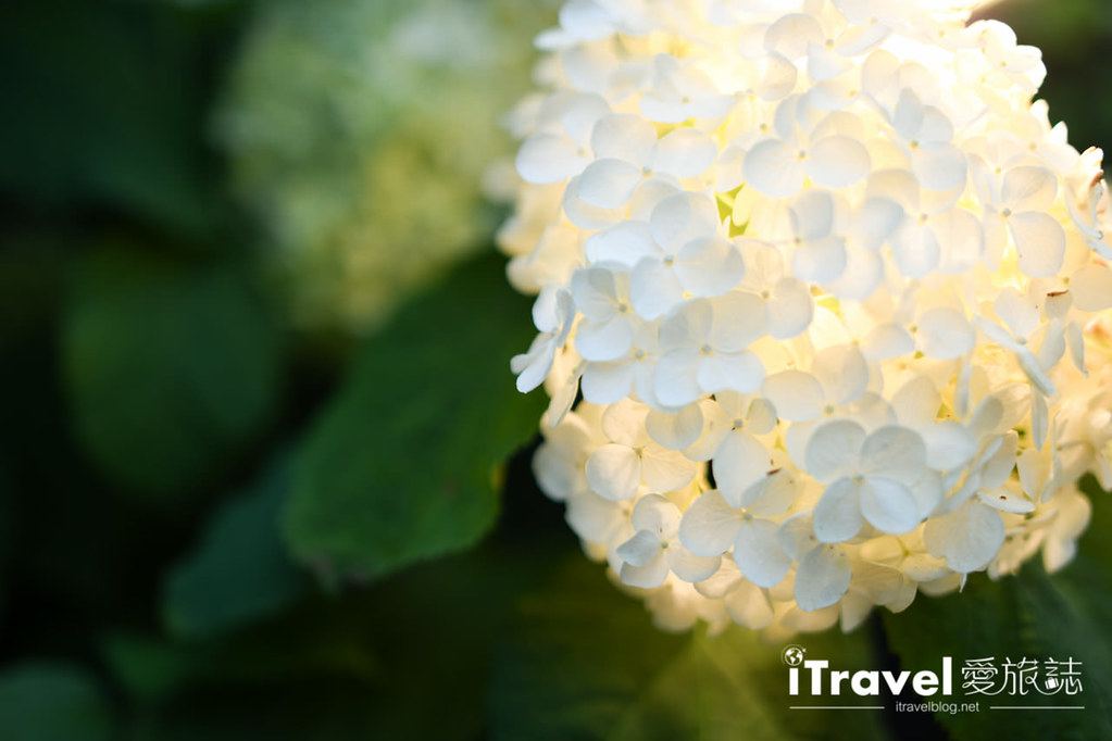 輕井澤大飯店&度假村 Le Grand Karuizawa Hotel & Resort (66)