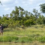 Manyeleti with Vuya Walking Safaris