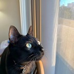 Felix - pensive