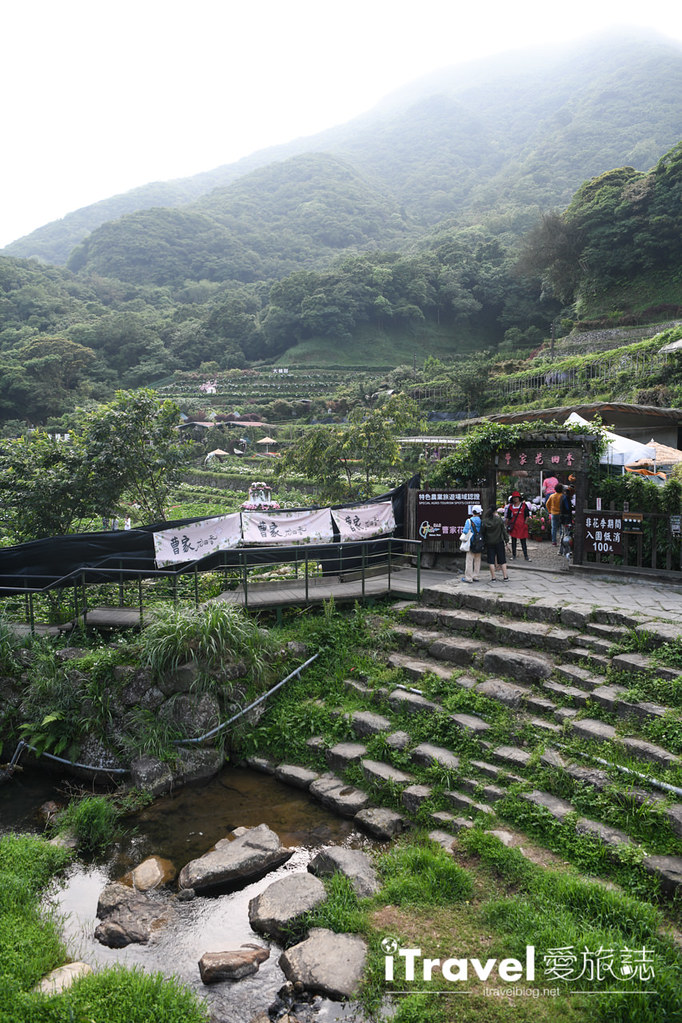 大梯田花卉生態農園 Taipei Hydrangea Terraced Fields (10)